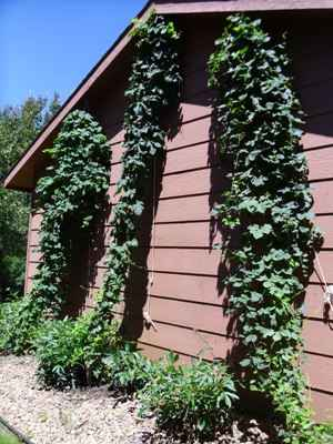 Progress pic for the 3 types of hops.