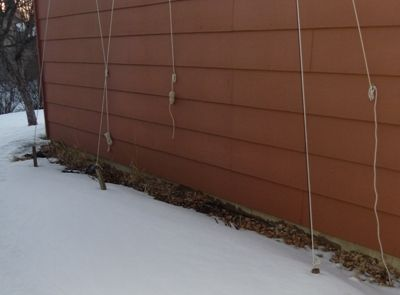 Snow covered hops this spring as of 21 March 2013